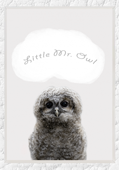 Little Mr. Owl