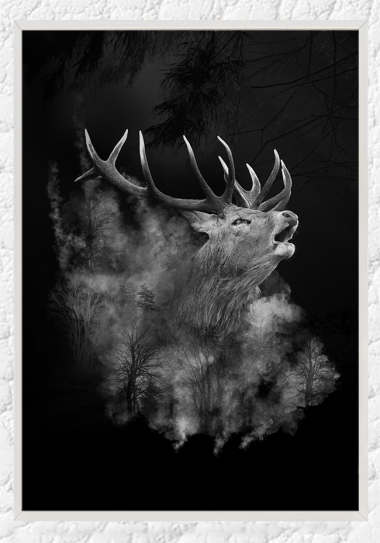 Red Stag II