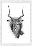 impala-F