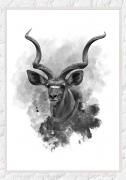 kudu-II-white-F