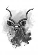 Kudu-II-white