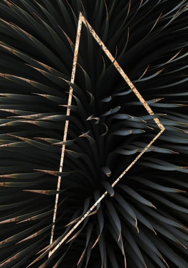 Palmtree Triangle